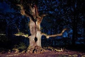 a tree!